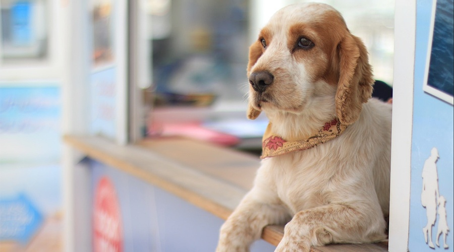 Sad dog sitting on a small business counter
