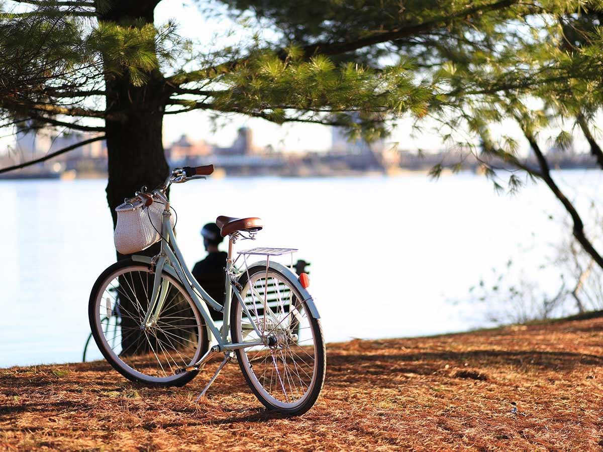 bike-under-the-tree-near-the-lake